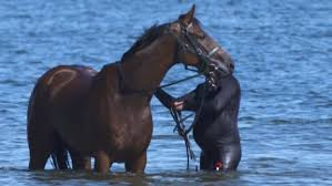 How To Tell If A Horse Is Blind Kentucky Derby 2017 Meet Patch The One Eyed Horse Cnn