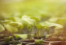 growing herbs indoors under lights how to grow herbs indoors under lights herbs indoors growing