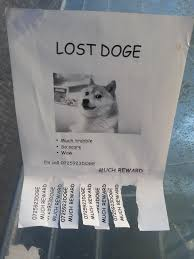 Lost Doge Meme - someone at my university lost their doge meme guy