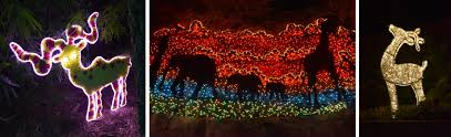 Zoo Lights Pictures by Channeling My Inner Child At Houston Zoo Lights U2013 Red Shoes Red Wine