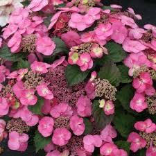 735 best flowers i like images on pinterest flower gardening
