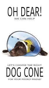 229 best dog health u0026 care images on pinterest health care fun