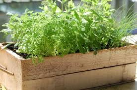 Potted Herb Garden Ideas Container Herb Garden Ideas Home Decorations Insight