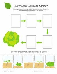 pumpkin life cycle pumpkin life cycle life cycles and worksheets