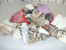 assorted seashells lbs assorted seashells approx 80 shells nautical