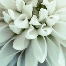 florist columbus ohio flowers by florists 3450 s hamilton rd southeast