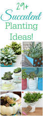 170 best plants images on pinterest gardening plants and balcony