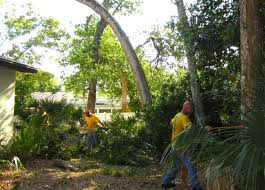 expand your outdoor space sb tree service 386 320 3056