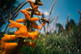 Huntington Botanical Garden by Shot Of The Week Busy Bee Huntington Botanical Gardens San