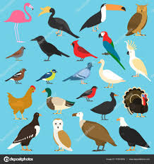 set of flat birds isolated on background different tropical and