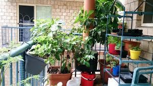 Small Apartment Balcony Garden Ideas Small Balcony Gardening Ideas Small Balcony Garden Small Balcony