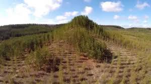 maataideteos puuvuori pinsiössä tree mountain a living time