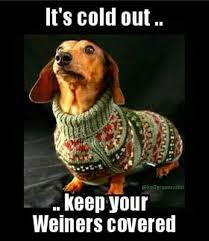 Wiener Dog Meme - the best wiener dog memes memedroid