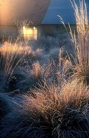 132 best le jardine plume images on garden gardens
