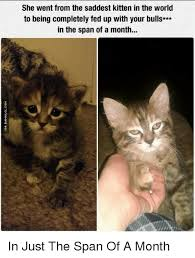 Sad Kitten Meme - she went from the saddest kitten in the world to being completely