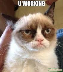 Working Cat Meme - u working meme grumpy cat reverse 11327 memeshappen