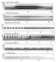 Mixed Patterns by Spectrograms Of Cicada Calling Songs Of Mixed Patterns Figure 2