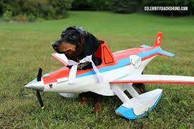 Airplane Halloween Costume 5 Dachshund Pup Halloween Costumes U0027ll Blow Mind