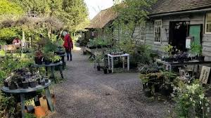 miss darmons little heath tea rooms the grounds youtube