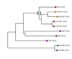 Trees And Their Meanings How To Read A Phylogenetic Tree Epidemic