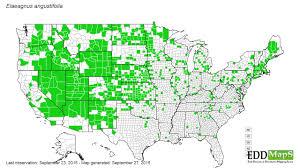 Wray Colorado Map Russian Olive Elaeagnus Angustifolia N A Rhamnales Elaeagnaceae