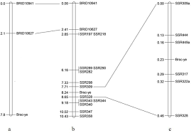 Linkage Map Identification Of Ssr Markers Closely Linked To The Yellow Seed