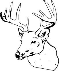 printable deer coloring pages kids whitetail pictures