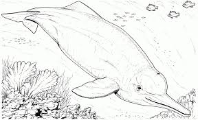 dolphin coloring pages animal printables kids 51209