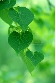 Green Color 1092 Best Green Grün Verde Images On Pinterest