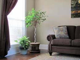 home design 85 glamorous plants for living rooms