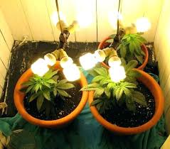 where to buy indoor grow lights plant lights lowes plant lights led grow led grow lights lowest