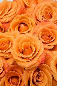 orange roses unique orange 20 100 stems