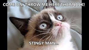 Grumpy Cat No Meme - grumpy cat says new youtube