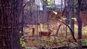 lots of points deer at dodge park sterling heights michigan youtube