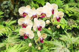Beautiful Botanical Gardens Coconut Club Vacations Reviews