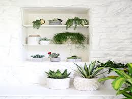 beautiful house plants unique indoor plants beautiful plant prayer plant beautiful house