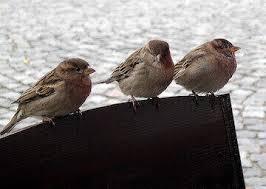 birds removal los angeles ca pest removal nj