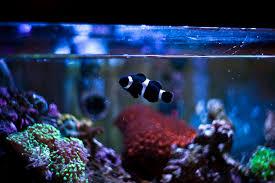 is safe for aquarium use