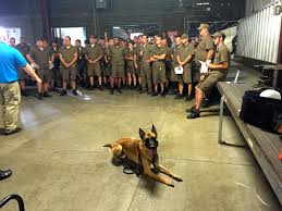 belgian malinois near me belgian malinois michigan dog training