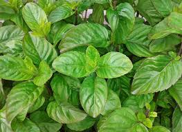 Easy Herbs To Grow Inside by 10 Highly Cost Effective Vegetables And Herbs Gardenaware Com