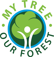 my tree our forest national association of state foresters