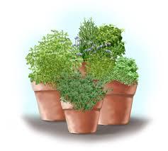 garden design garden design with one pot seven herbs organic