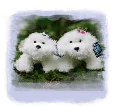 bichon frise fluffy a pair of very cute and fluffy bichon frise stuffed toys bella