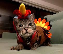 Thanksgiving Cat Meme - cat thanksgiving turkey thanksgiving blessings