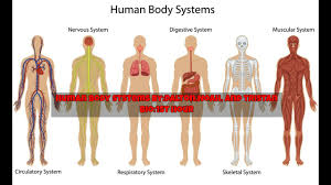 Human Anatomy And Body Systems Body Systems 1st Hour Bio Dalton Noah And Tristan Youtube