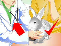 how to keep pet rabbits cool 11 steps with pictures wikihow