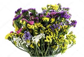 statice flowers multicolor statice flowers for dried posy stock photo manka