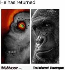 Funny Gorilla Memes - harambe has returned funny hurricane meme pmslweb