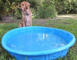 tiny pool pool party really thek9harperlee