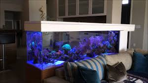 200 gallons living reef aquarium room divider side 1 youtube